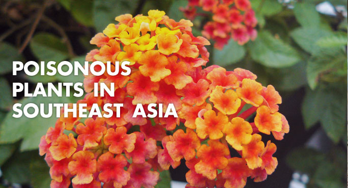 poisonous plants in southeast asia
