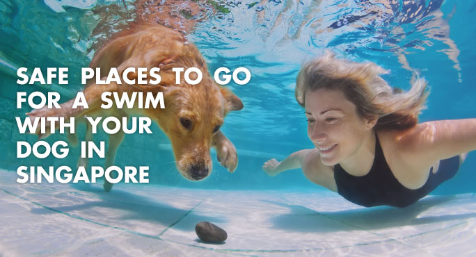 Safe Places to Go for a Swim with Your Dog in Singapore