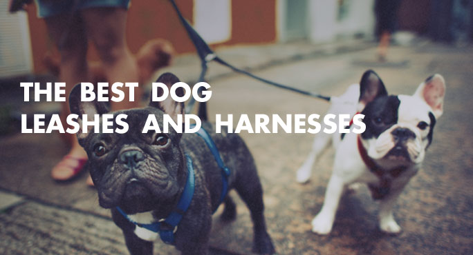 The-Best-Dog-Leashes-And-Harnesses-Blog.jpg