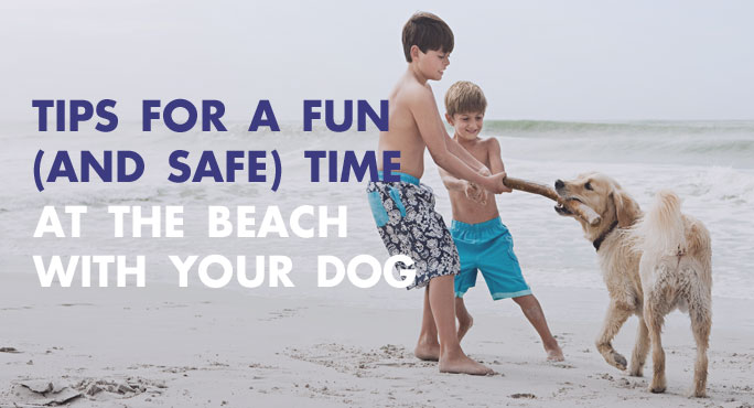 Tips-Fun-Safe-Beach-Dog-Blog.jpg