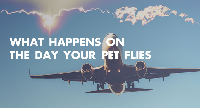 What-Happens-On-the-Day-Your-Pet-Flies-Blog.jpg