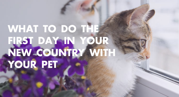 What to Do the First Day in Your New Country with Your Pet