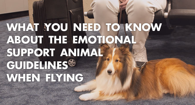 What-You-Need-To-Know-Emotional-Support-Animal-Guidelines-Blog.jpg